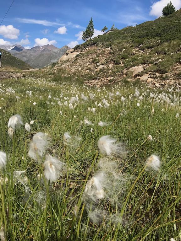 Blumen Weisssee